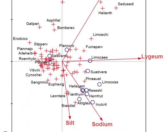 Patrones espacio-temporales de los bancos de semillas y ciclos regenerativos en estepas salinas mediterráneas