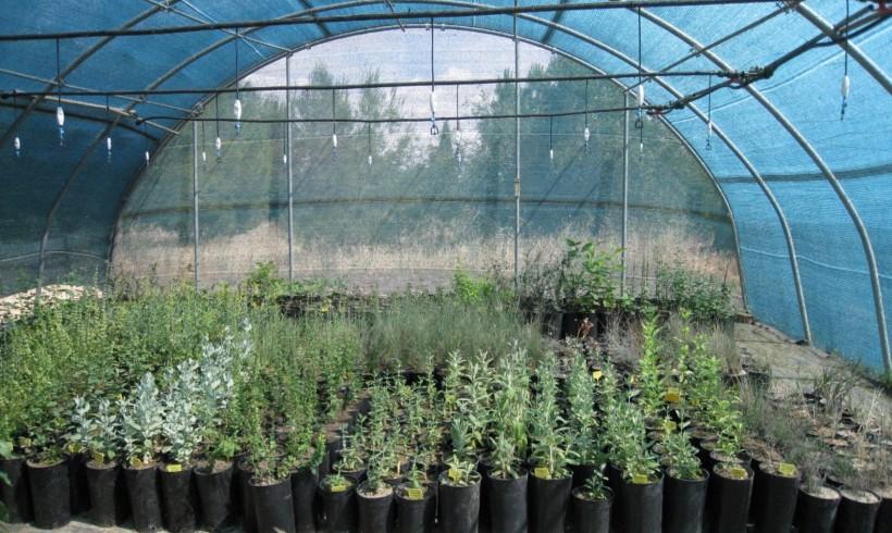 Restauración ecológica de estepas yesosas en La Mesa de Ocaña (Toledo)