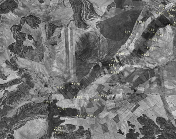 Evaluación de la capacidad de regeneración natural de albardinares continentales de Lygeum spartum en la provincia de Albacete