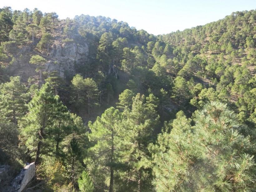Los bosques españoles y el cambio global: amenazas y oportunidades (CONSOLIDER-INGENIO 2010)
