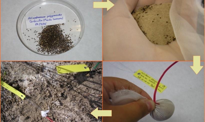 Ecología de la germinación y de los bancos de semillas del suelo de 15 especies vegetales amenazadas en Castilla-La Mancha