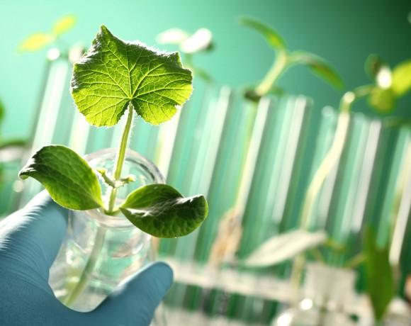 Estrés oxidativo en plantas: simulación computacional y diseño de sensores