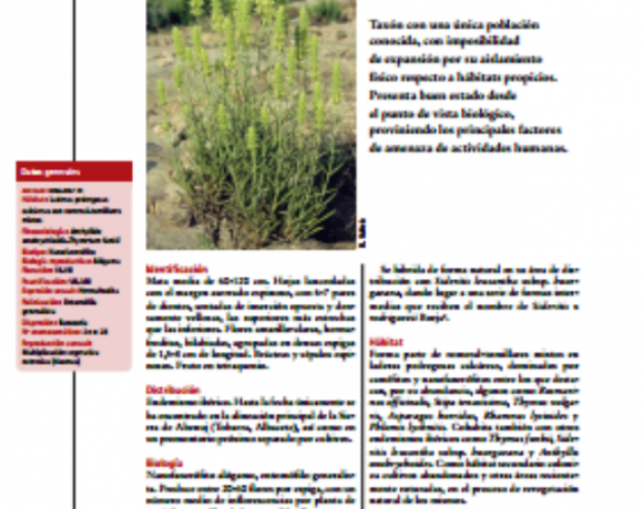 Annual dormancy cycles in buried seeds of shrub species: germination ecology of Sideritis serrata (Labiatae).