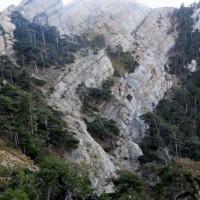 Impacto del cambio climático en la distribución de árboles de montaña: balance entre supervivencia y crecimiento de juveniles