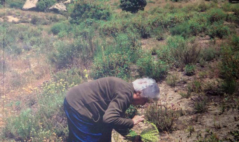 Capítulo I: Fichas: Narcissus bulbocodium, Narcissus jonquilla, Narcissus tazetta, Narcisus triandrus, Helichrysum italicum, Helichrysum stoechas, Santolina chamaecyparissus, Santolina rosmarinifolia, Scorzonera laciniata, Sisymbrium officinale, Centaurium, Sideritis hirsuta, Sideritis hyssopifolia, Sideritis tragoriganum, Sideritis, subgénero marrubiastrum, Polygonatum odoratum, Oxalis acetosella, Phoenix canariensis, Limonium sinuatum, Thymelaea hirsuta