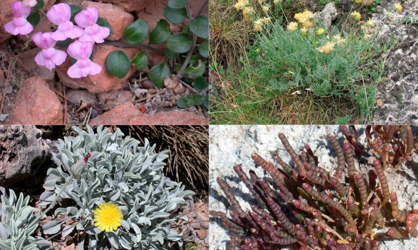 Convenio de colaboración científica entre la UCLM y la Empresa Pública de Medio Ambiente de CLM para la mejora del conocimiento de la flora amenazada de Castilla-La Mancha en el contexto de la Directiva de Hábitats (D. 43/92/CEE) y de la Red Natura 2000