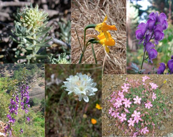 Seguimiento de Flora Amenazada y de Protección Especial en España (SEFA)