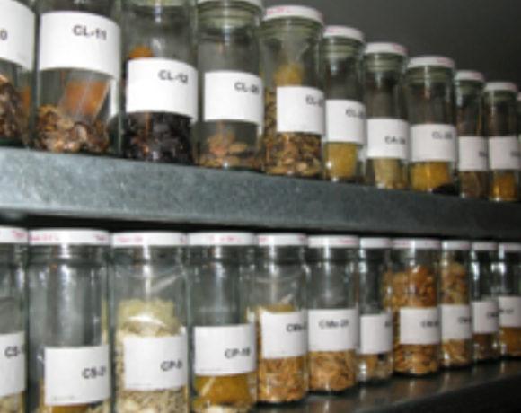 Desarrollo de herramientas bioinformáticas para la racionalización de colecciones de germoplasma: aplicación a colecciones de tomate de los bancos españoles