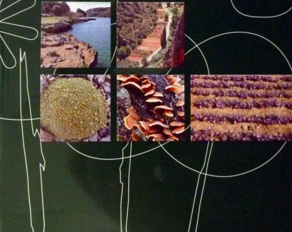 Paisajes vegetales y recursos forestales. Introducción a la descripción y dinamismo de los bosques y matorrales Castellano Manchegos