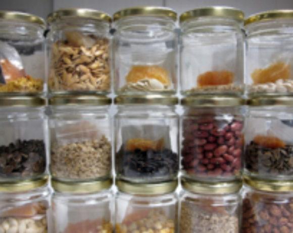 Recolección, multiplicación y caracterización de los recursos fitogenéticos hortícolas para su conservación en los Bancos de Germoplasma